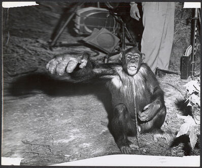 Weegee, 'Monkey in the Zoo, Distortion', 1950s