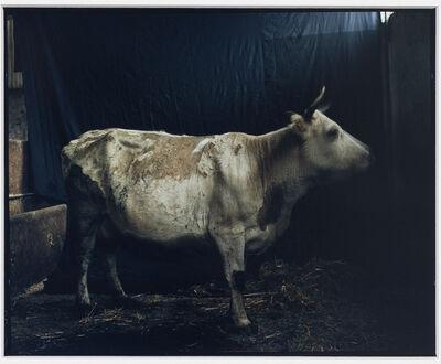 Eric Poitevin, 'Sans titre (Vache)', 1997-2020
