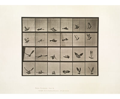 Eadweard Muybridge, 'Animal Locomotion, Plate 757 (Pigeon Flying)', 1887