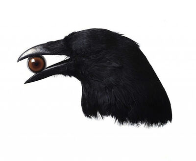 Nancy Fouts, 'Crow with Eye', 2010
