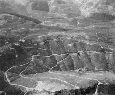 Frank Gohlke, 'Aerial view: clearcuts and logging roads- vicinity of Mt. St. Helens, Wash., 1982 (outside impact area)', 1982