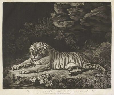 Robert Laurie, 'A Tigress lying on the ground', circa 1780
