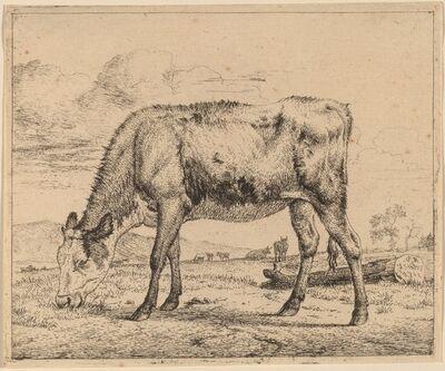 Adriaen van de Velde, 'Grazing Calf', ca. 1657/1659
