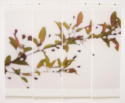 Jeri Eisenberg, 'Crabapple', 2008
