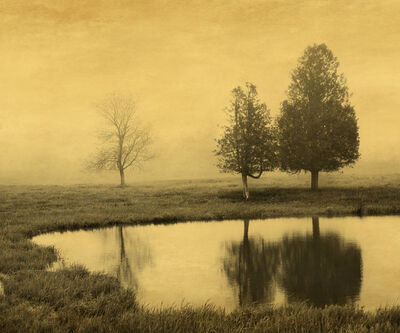 Joyce Tenneson, 'Trees and Reflection', 2013