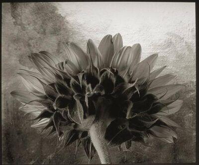 Cy DeCosse, 'Sunflower II'