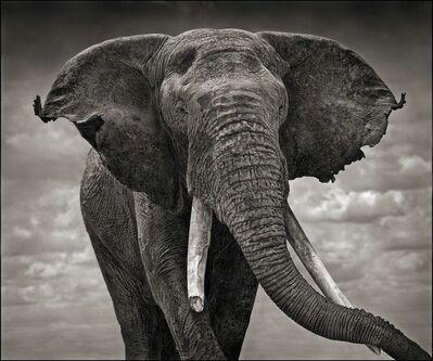 Nick Brandt, 'Elephant with Tattered Ears, Amboseli', 2008