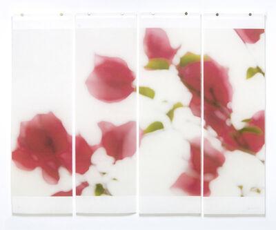 Jeri Eisenberg, 'Bougainvillea, No.2', 2017