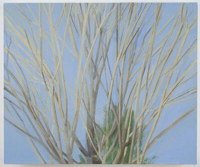 Sylvia Plimack Mangold, 'Winter Maple', 2007