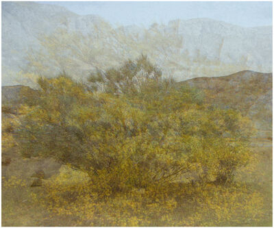 Amy Elkins, 'Five Years out of a Death Row Sentence  (Dying Wish- Ratama Tree)', 2009-2016