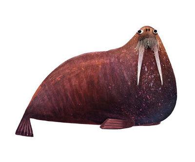 Brendan Wenzel, 'Atlantic Walrus'