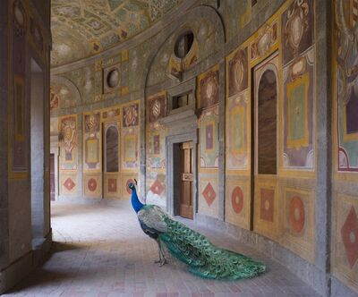 "Karen Knorr, 'Wings of Change, from the series ""Metamorphoses""', 2015"
