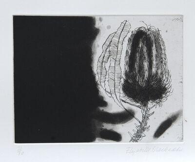 Elizabeth Blackadder, 'Banksia', 1989