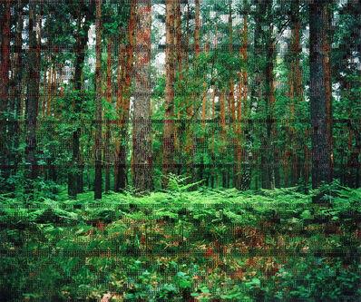 Diane Meyer, 'Forest, Hohen Neuendorf', 2017