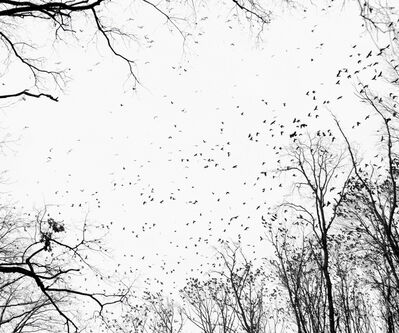 Tamas Dezso, 'Crows (Near Debrecen, East Hungary, 2009), from the series Notes for an Epilogue', 2009