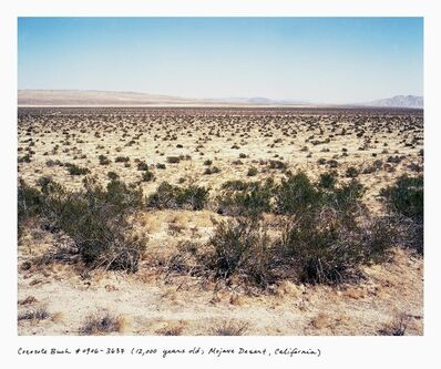 Rachel Sussman, 'Creosote Bush #0906-3905 (12,000 years old; Mojave Desert, California)', 2005