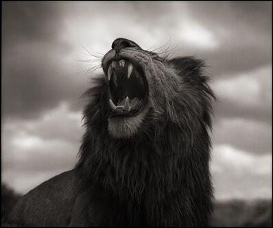 Nick Brandt, 'Lion Roar, Maasai Mara 2012', 2012