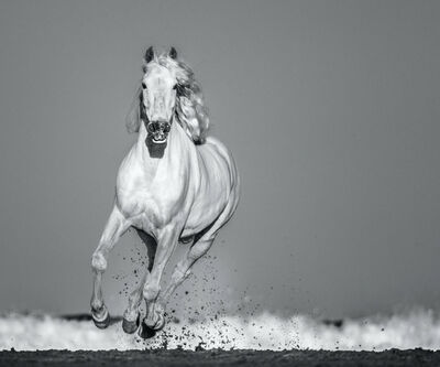 David Yarrow, 'Pegasus', 2020
