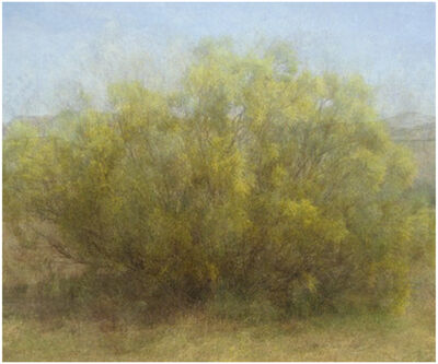 Amy Elkins, 'Fourteen Years out of a Death Row Sentence (Dying Wish- Ratama Tree)', 2009-2016