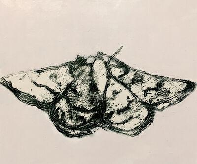 David Konigsberg, 'Moth #3', 2020