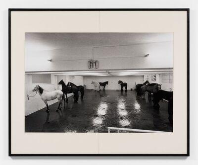 Claudio Abate, 'Jannis Kounellis - 12 cavalli', 1969
