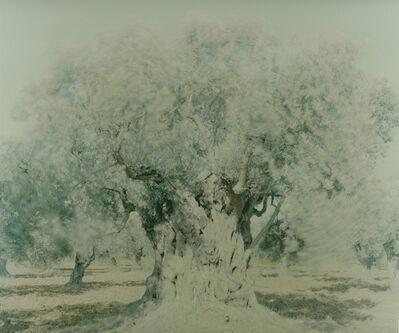 Ori Gersht, 'Olive 8', 2003