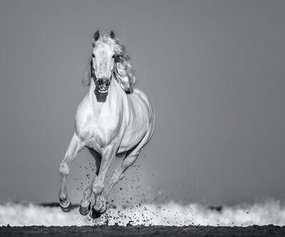 David Yarrow, 'Pegasus', 2020