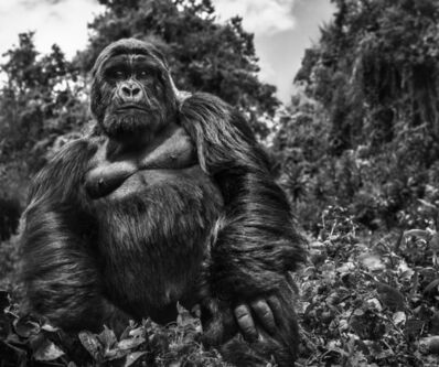 David Yarrow, 'Judge & Jury', ca. 2019