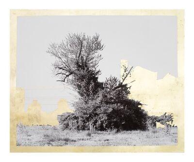 Daniel Ballestros, 'Gold Leaf Tree No. 087', 2018