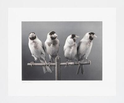 Carsten Höller, 'Four Birds', 2015