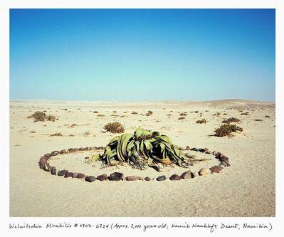 Rachel Sussman, 'Welwitschia Mirabilis #0707-6724 (2,000 years old; Namib Naukluft Desert, Namibia)', 2007