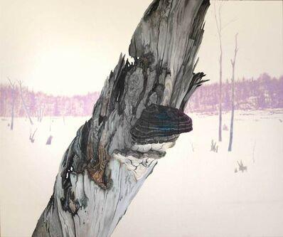 Ray Cicin, 'Artist's Conk, Beef Tea Creek'