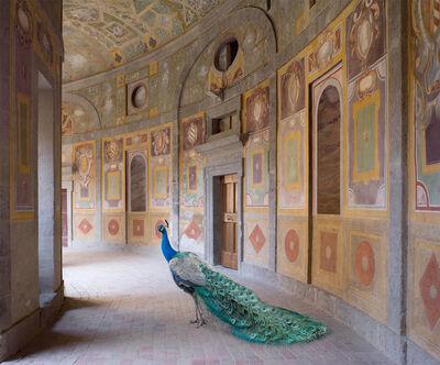 Karen Knorr, 'Heaven's Vault, Villa Farnese, Caprarola (Metamorphoses)', 2014
