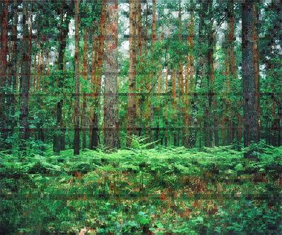 Diane Meyer, 'Forest, Hohen Neuendorf', 2012-2017