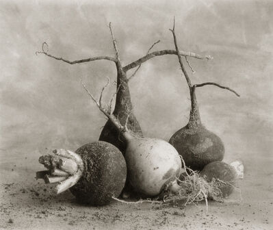 Cy DeCosse, 'Black Radishes and One White One'