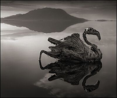 Nick Brandt, 'Calcified Reflected Flamingo, Lake Natron 2010', 2010