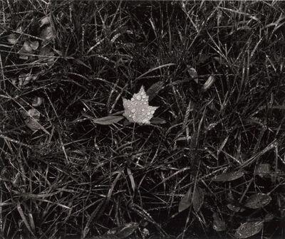 Paul Caponigro, 'Leaf in Grass, Cushing, ME', 2013