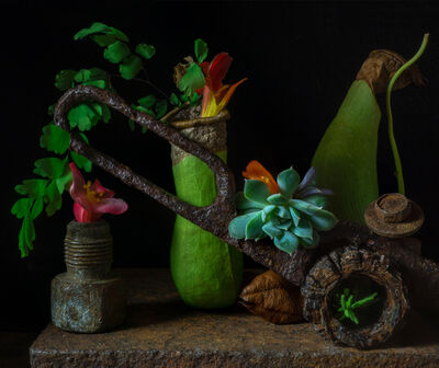 Allan Markman, 'Still Life with Pitcher Plants and Scissor'