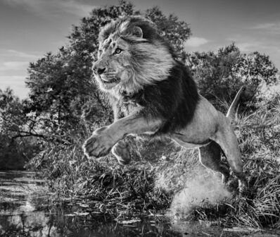 David Yarrow, 'First Down', 2020