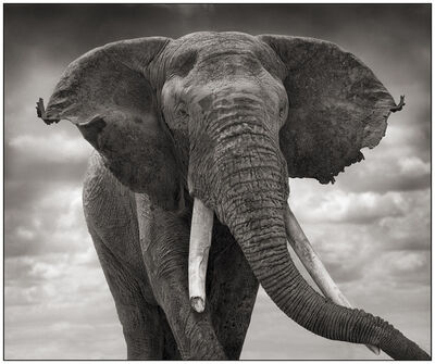 Nick Brandt, 'Elephant with Tattered Ears', 2008