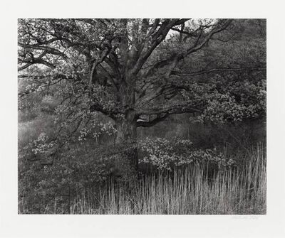 George Tice, 'Oak Tree, Holmdel, New Jersey', 1980