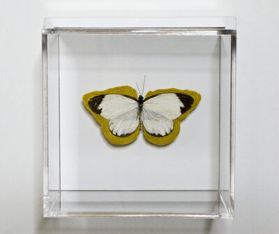 Esther Traugot, 'Pale Green black tips butterfly', 2020