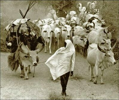 Mirella Ricciardi, 'Orma Cattle Caravan on the Move', ca. 1967