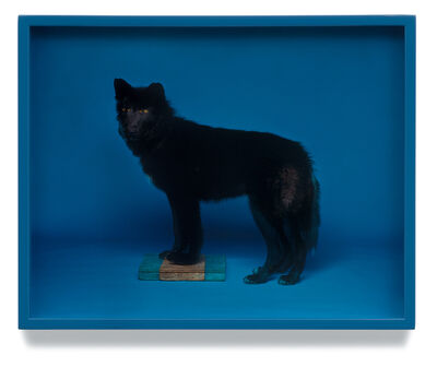 Elad Lassry, 'Wolf (Blue)', 2008