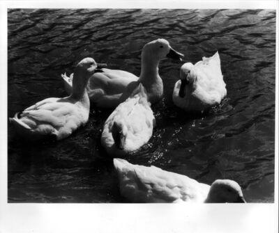 Takuma Nakahira, 'Adieu A X (#57)', 1980