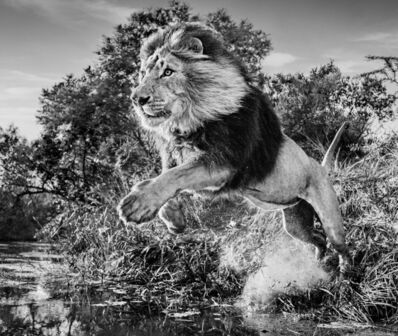 David Yarrow, 'First Down, South Africa', 2020