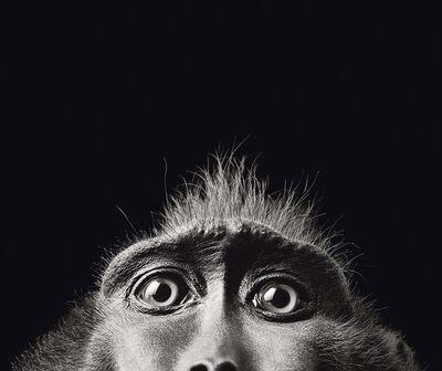Tim Flach, 'Monkey Eyes', ca. 2008