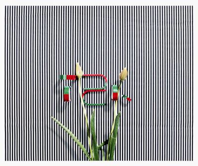 Annette Kelm, 'Untitled (TZK)', 2013
