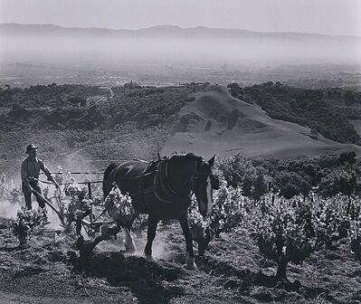 Ansel Adams, 'Paul Masson Vineyards', 1959