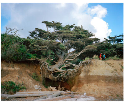 Anna Beeke, 'The Tree of Life', 2012